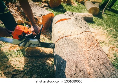The work of a tree-cutting mechanic in the garden