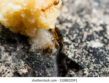 Worker ants gather food
