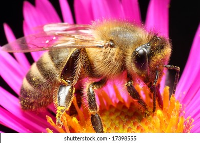 Worker bee on flower - closeup