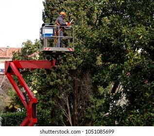 A worker with a chainsaw prunes the trees from an aerial platform