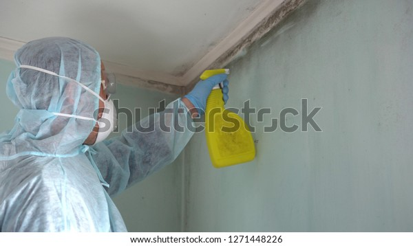 Mold Removal in Draper