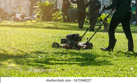 The worker is cutting grass in the public park by the lawnmower.