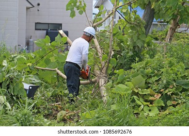 A worker cutting tree.
