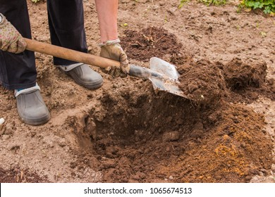 Worker digs the black soil with shovel in the vegetable garden, woman loosens dirt in the farmland, agriculture and hard work concept