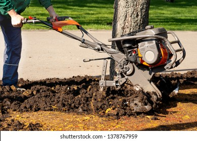 A worker digs the ground in a park around a tree using landscape gardening equipment.  Spring cleaning work in the park area.