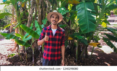 Worker farmer in banana farm
