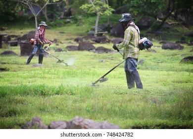 The worker of a garden cuts off a grass