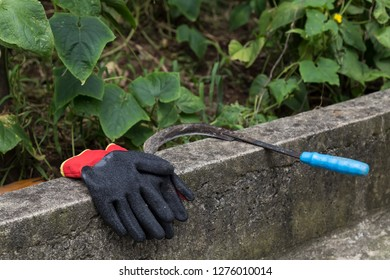 worker gloves and sickle on the wall near the vegetables field .