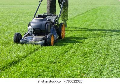 Worker guy shake pour grass from lawn mower bag into wheelbarrow. Garden meadow lawn cutting. Summer works in garden. Static shot.