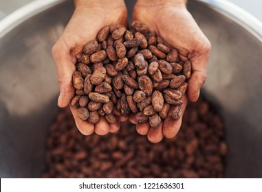 Worker holding a handful of cocoa beans over a stainless steel bowl while standing in an artisanal chocolate making factory