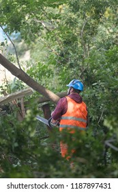 Worker with reflective waistcoats in forest helping with holding a sawn tree