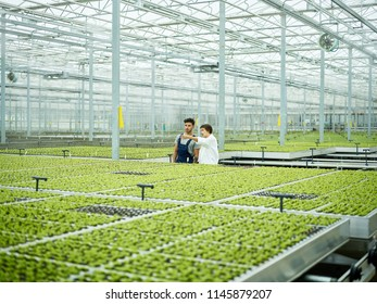 Worker and scientist communicating among lush growing plants in huge greenhouse of agronomy complex