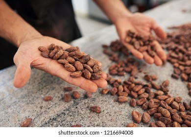 Worker selecting the best cocao beans for production by hand while standing at a table in an artisanal chocolate making factory