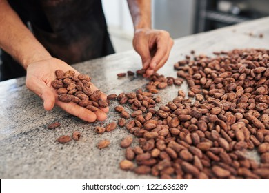 Worker selecting the best cocao beans for production while standing at a table in an artisanal chocolate making factory
