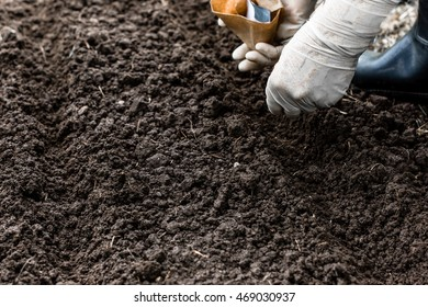Worker is sowing lettuce seeds in the garden, vegetable and agriculture concept