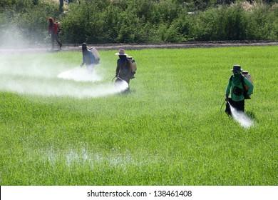 worker spraying pesticide in field.