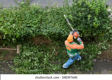 worker trims hedges