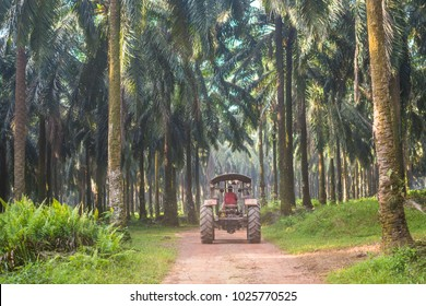 Worker truck at palm oil plantation. Soft focus due to shallow Depth Of Field.