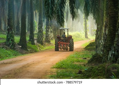 Worker truck at palm oil plantation.