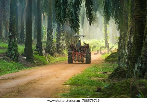 Camion de travail à la plantation d'huile de palme.