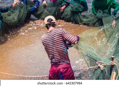Worker use a fishing net for dragging the shrimp in the pond