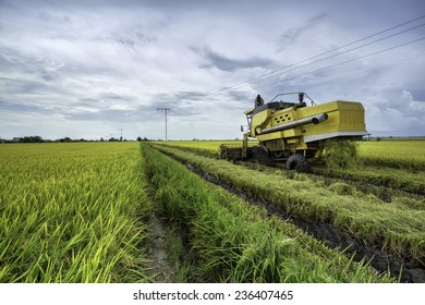 Worker uses machine to harvest rice on paddy field in Sekinchan