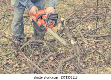 Worker using chain saw and cutting tree branches.