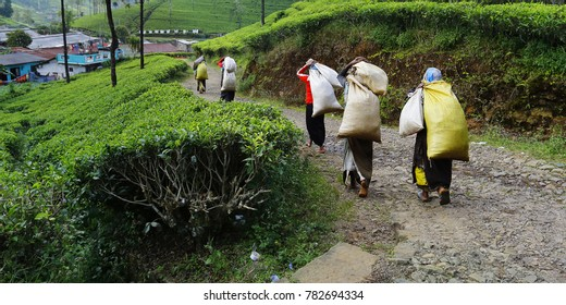 workers come back after working in tea plantation