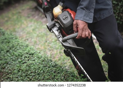 Workers are cutting the garden