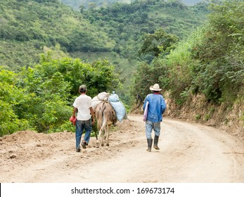 Workers and Donkey on Way to Work