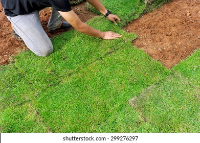 Workers are planting grass in the backyard.