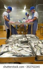 workers are sorting mackerel fish