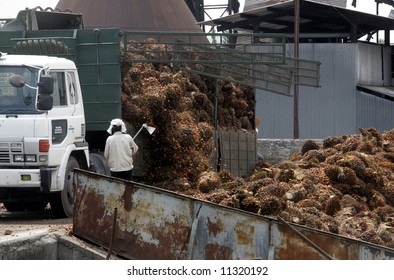 Workers unload oil palm fruits at a factory