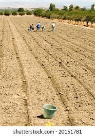 workers working in the fields  (bucket)