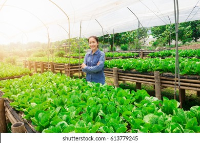 Working asian women concede and be smile in organic  Vegetable growing farm.