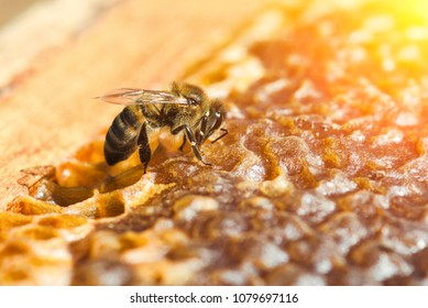 Working bee in a honeycomb close-up macro image
