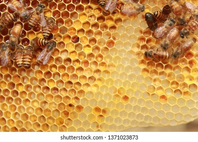 Working bees on hexagonal honey cells