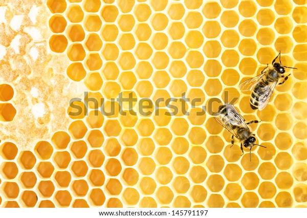 Bienen auf Honigwabenrüben