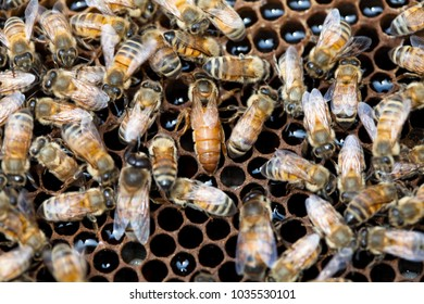 Working bees on the honeycomb with sweet honey