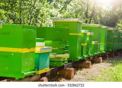 Working in beeyard full with beekeeping accessories Beeyard with bees. Selective focus