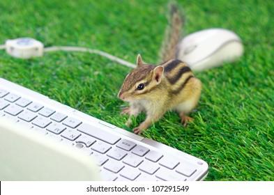Working Chipmunk