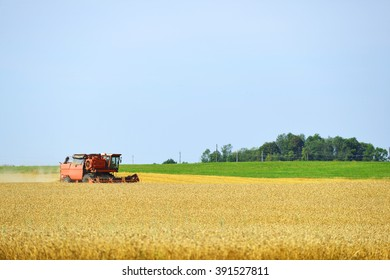 working harvester on  wheat field
