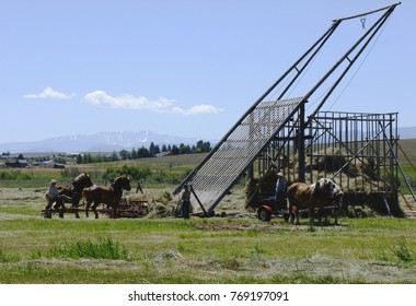 Working hay storage with a beaver slide and horses.