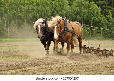 Working horse with a farm field in the background