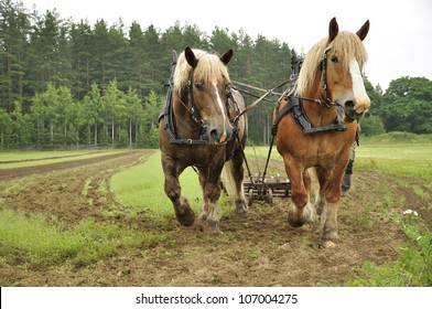 Working horses with a farm field in the background