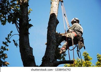 Working on a tree as a tree climber
