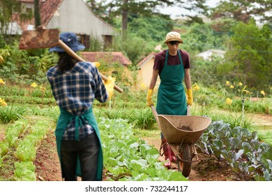 Working process at spacious vegetable garden  handsome Asian man wearing  apron and gumboots driving empty ea52f95191a5