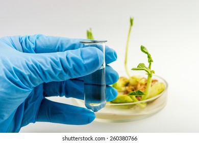 workplace on laboratory for  biotechnology test. Scientist holding samples of plants