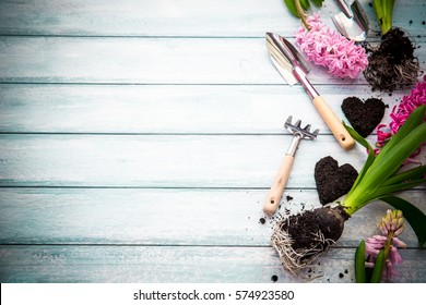 Workspace, Planting spring flowers. Garden tools, Hyacinth and plants in pots on a flat wooden background. Gardening decoration