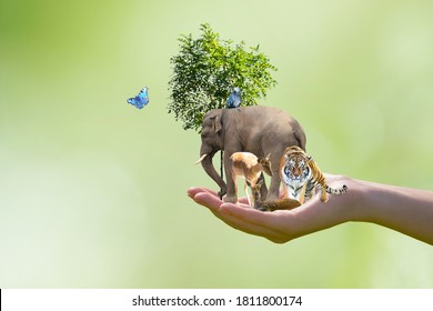 World Animal Day or Wildlife Day concept. Elephant, tiger, deer, parrot and green tree in human hand. Saving planet, protect nature reserve, protection of endangered species and biological diversity.